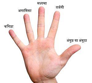 हरेक उंगली का नाम : अंगूठा, तर्जनी, मध्यमा, अनामिका ,अंगूठी वाली उंगली , कनिष्ठा सबसे छोटी उंगली