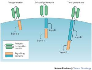 सीएआर-टी कोशिका चिकित्सा(CAR-T cell therapy)