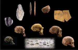 मानव उत्पत्ति और आकार(Human origins take shape)